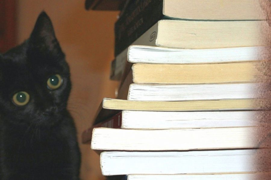kittens and books